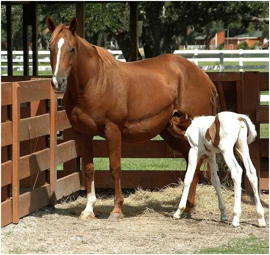 horse joint health