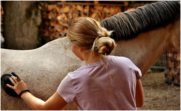 horse skin protection