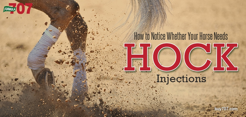 How to Notice Whether Your Horse Needs Hock Injections