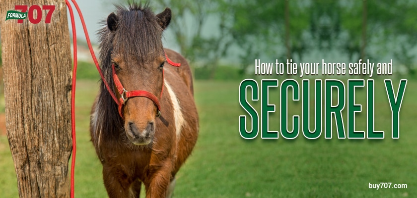 How to Tie Your Horse Safely and Securely