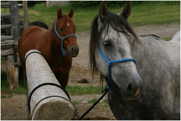 Tie Your Horse