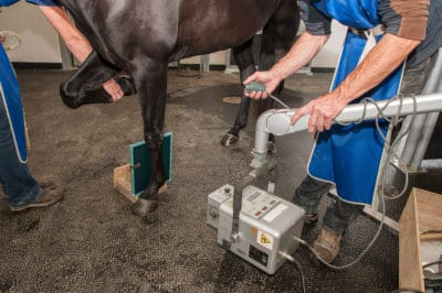 Equine Radiograph - lameness detection