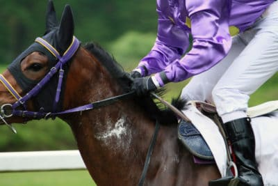 race horse sweat - supplementing for summer sweating