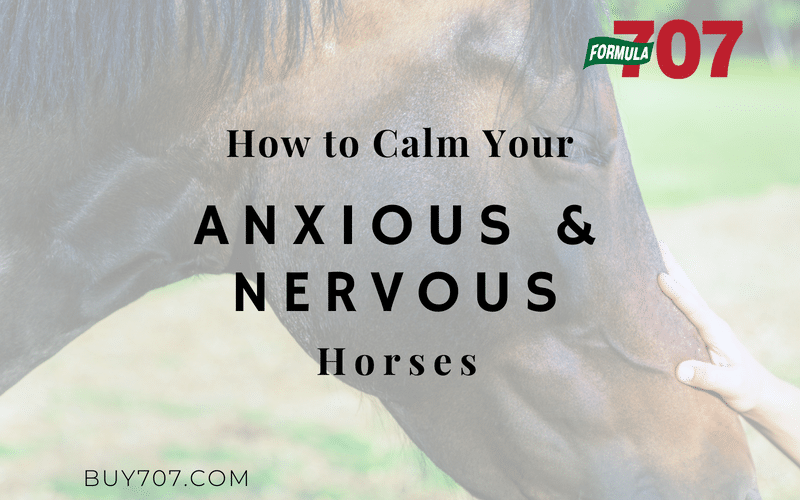 Calm Anxious and Nervous Horses Blog Feature Photo