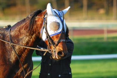 Horse Care Tips for Hot Weather Conditions - Horse Sweating