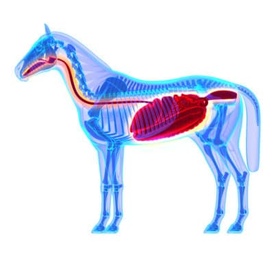 What You Need to Know About Horse Digestive Support - Buy707.com